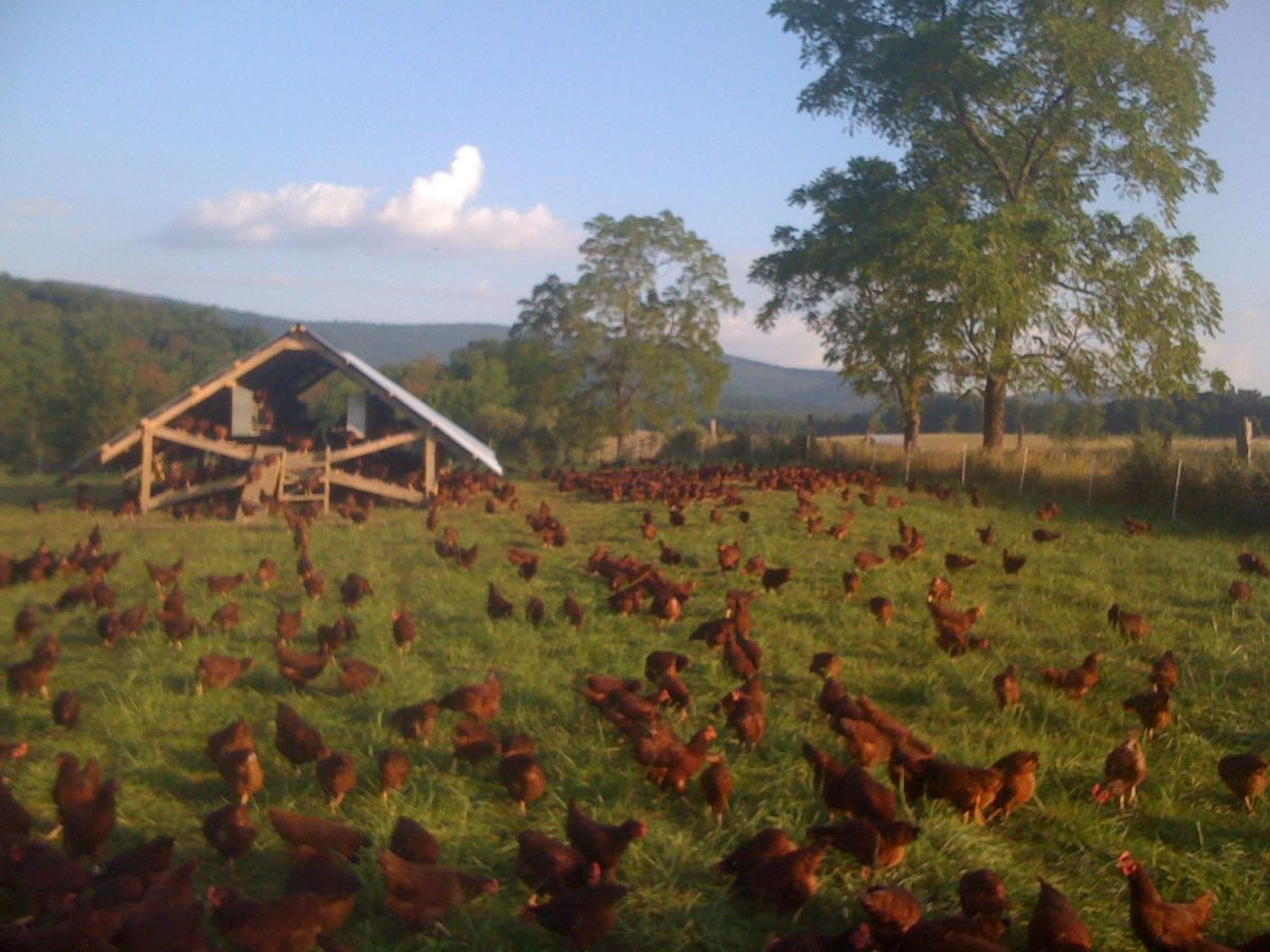 farmageddon production still 11